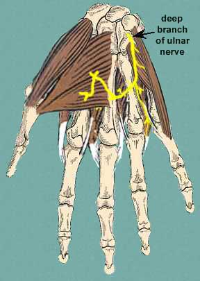 deep nerves of palm of hand